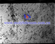 moly carbide needles